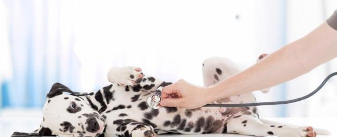 emergency veterinarian