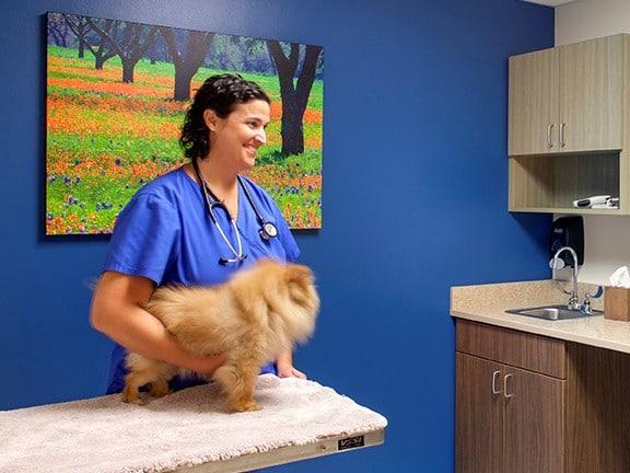 emergency-vet-visit