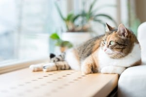 Urinary health for cats