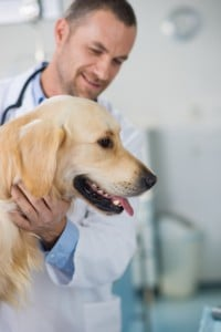 lymphoma treatments for dogs